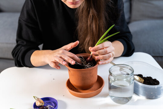 Young millennial woman planting onion herbs at home in a pot. Home gardening hobby. Zero waste sustainable lifestyle. Healthy clean food