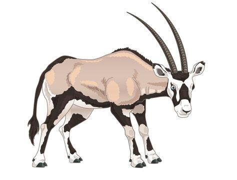 Arabian Oryx cartoon illustration
