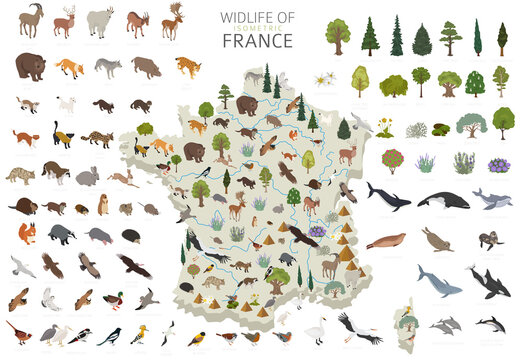 Isometric 3d design of France wildlife. Animals, birds and plants constructor elements isolated on white set. Build your own geography infographics collection.