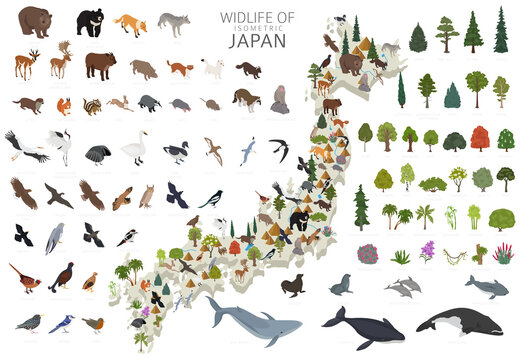 Isometric 3d design of Japan wildlife. Animals, birds and plants constructor elements isolated on white set. Build your own geography infographics collection