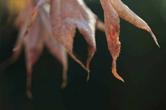 background of dried leaves macro