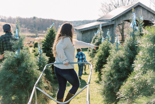 Family picking out their Christmas tree at a local farm