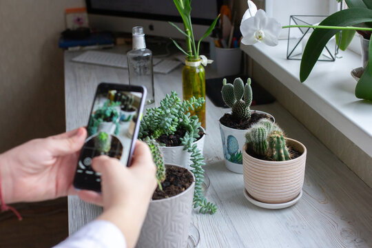 Florist blogger taking photos of home garden with cactuses and bamboo, phone photography for work, mobile phone in hands