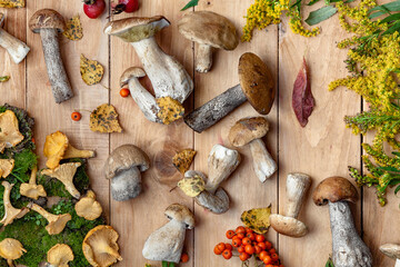 Fototapeta Raw wild  mushrooms  for cooking. Composition with wild mushrooms.Edible wild mushrooms,  on the wooden background.