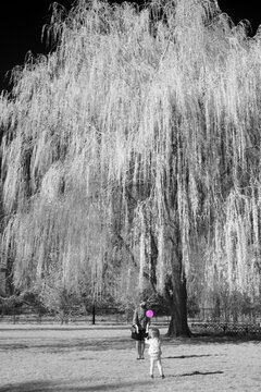 Mom and child playing virus-like ball. Living in times of risky interactions. Willow tree and green vegetation in infrared in the background.