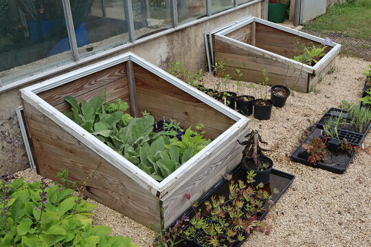 Vegetables growing in a cold frame in an English country house