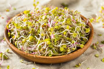 Fototapeta Organic Raw Red Radish Sprout Microgreens obraz