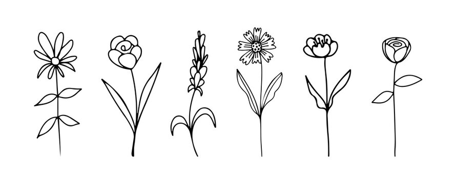 Doodle flowers set. Vector collection of botanical sketches for wedding invitations, birthday cards, March 8