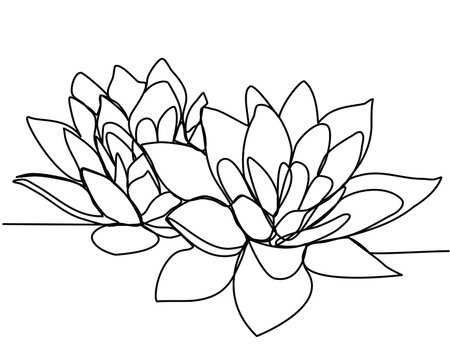 Continuous line drawing of two lotuses. The concept of beauty and nature, love. Ecology of aquatic plants. Water lily flower hand drawn design one outline sketch. Vector illustration.