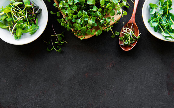 Assortment of micro greens at black background, copy space, top view. Healthy lifestyle