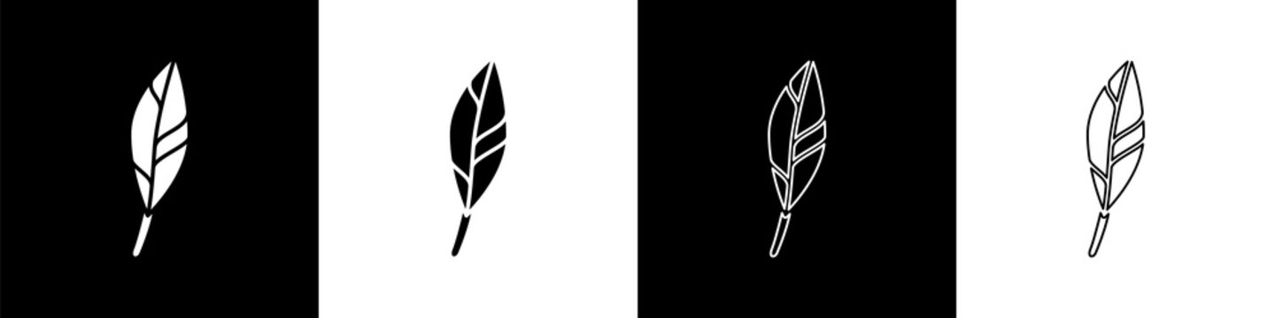 Set Magic feather icon isolated on black and white background. Vector.