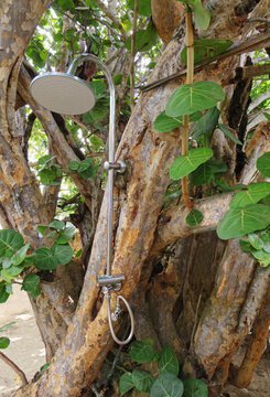 Outdoor stainless steel shower in tropical tree. Modern outdoor shower area. Tropical outdoors shower. French West Indies.