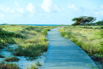 path in the park among beach on Aruba island