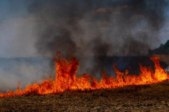 Fire in field after wheat harvest in summer