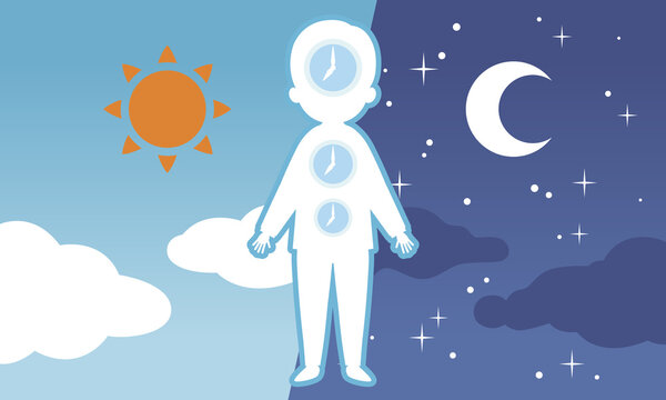 昼と夜の背景と体内時計