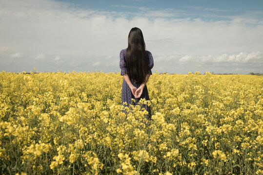 Back view of girl in vintage blue dress standing in field of yellow mustard seed rapeseed flowers (Sinapis alba)
