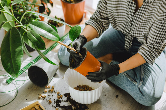 woman transplanting flowers in bigger pots at home