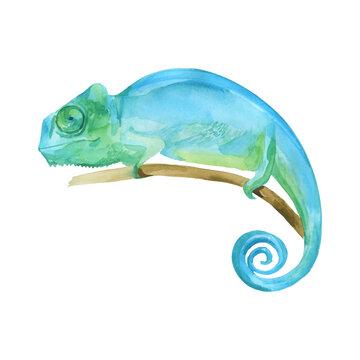 "Blue Iguana watercolor painting vector illustration,  ""Grand Cayman Blue Iguana"", lizard on the branch. Sleeping dragon big reptilia wild animal."