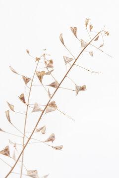 Branch romantic beige color shepherd's bag dry little flowers vertical