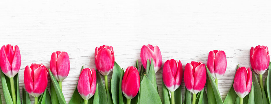 Flowers panoramic border of beautiful pink tulips on wooden background.