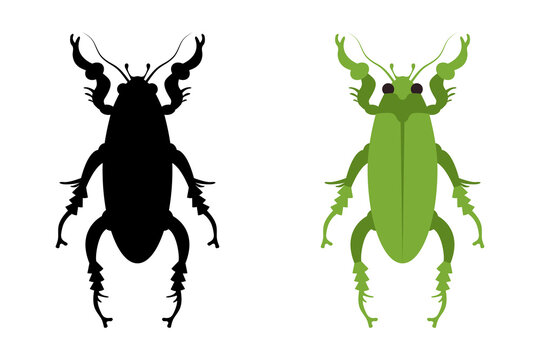 A vector illustration of an amazing jewel beetle