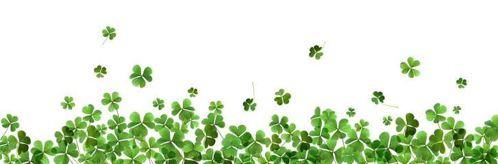 Fototapeta Fresh green clover leaves on white background, banner design. St. Patrick's Day obraz