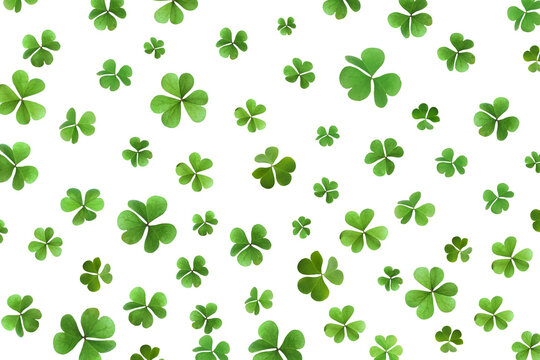 Fresh green clover leaves on white background. St. Patrick's Day