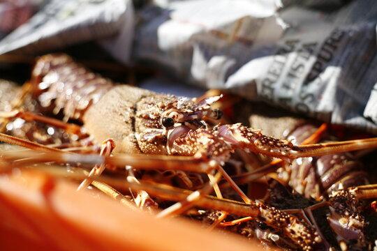 Lobster in fishing market