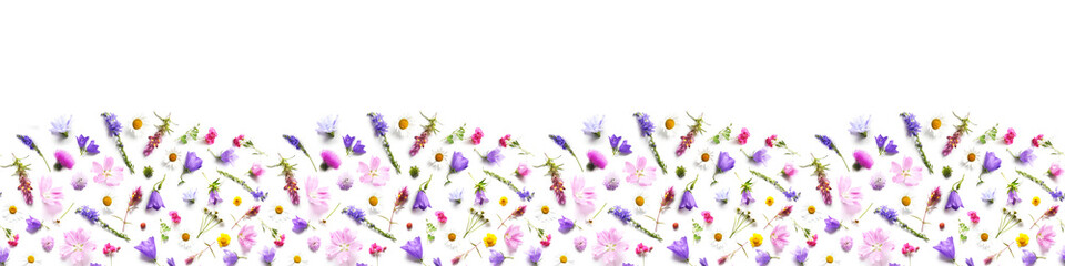 Fototapete - Pattern from plants, wild flowers isolated on white background, top view. Banner,border.The concept of summer, spring, Mother's Day, March 8.