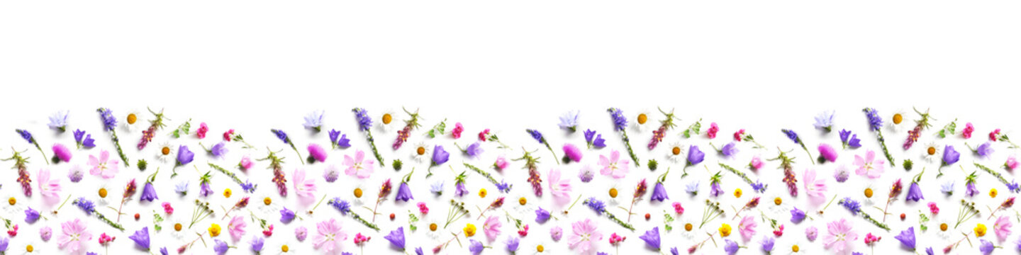 Pattern from plants, wild flowers isolated on white background, top view. Banner,border.The concept of summer, spring, Mother's Day, March 8.