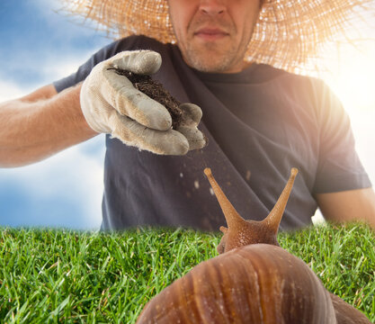 Soft focus of snail viewed from behind on fresh green grass and gardener.