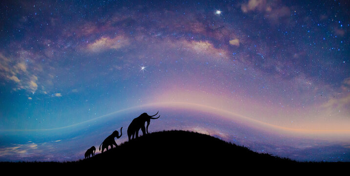 The silhouette of an elephant walking through the grass, on milky way background, With the compression artifact technique