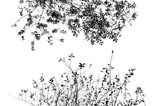 Minimalist black and white photograph of the tops of two trees in high key.