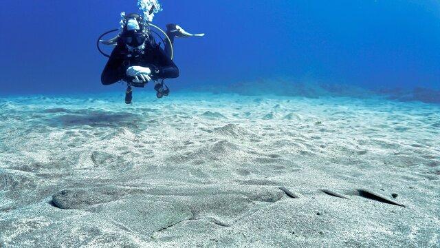 Scuba diving with an Angel Shark