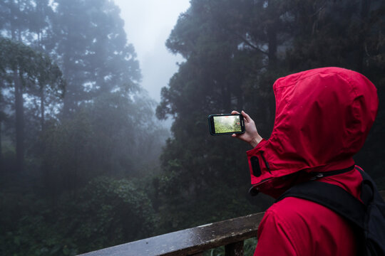 Side view of anonymous hiker in hoody raincoat standing on footbridge and taking picture of nature while hiking alone in green coniferous forest in foggy rainy weather