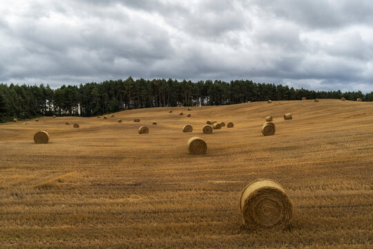 Scenery of dried field with haystacks on cloudy day in countryside in Scotland
