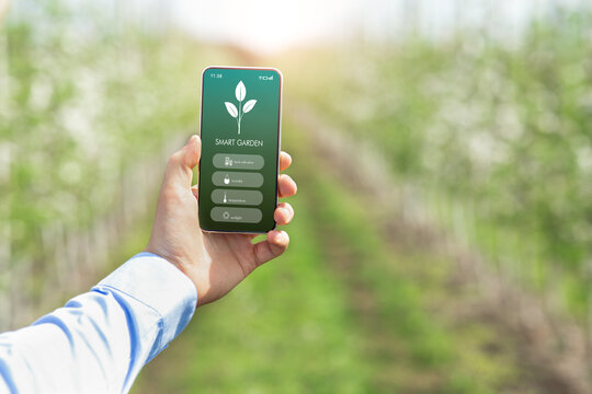Agronomist holding mobile phone with SMART GARDEN app, checking temperature, humidity and other farming parameters