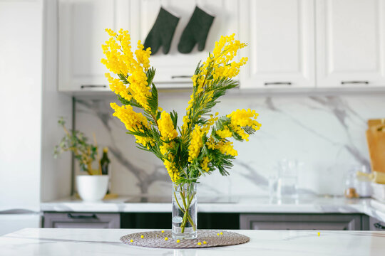 Mimosa Branch on the background of a Gray and White Kitchen. Banner for March 8. Women's Day. Color 2021.