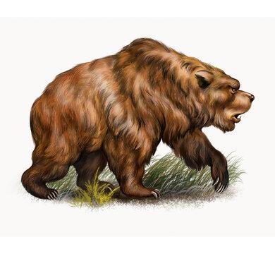 The cave bear (Ursus spelaeus)