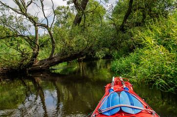 Fototapeta Szerokie poziome ujęcie rzeki Wierzyca, powalonego drzewa i kajaka podczas spływu obraz