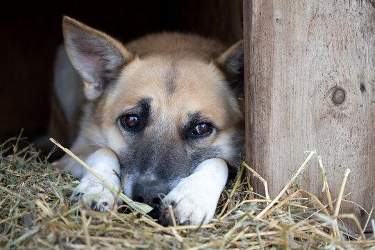 Portrait of a sad, bored dog