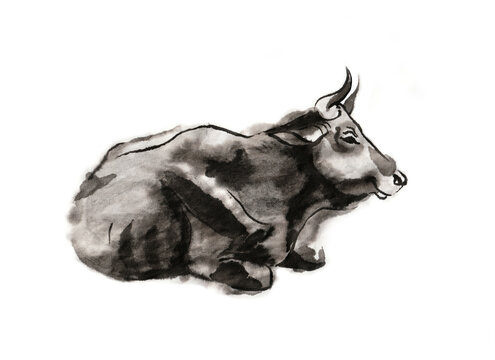 Resting cow, sumi-e illustration. Oriental ink wash painting . Symbol of the eastern new year of the Ox.