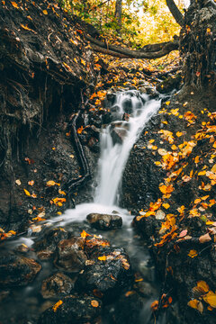 The small waterfall in the forest
