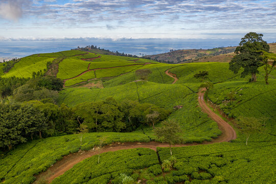 Aerial view of tea fields in the highlands of Malawi.