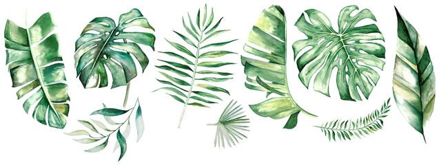 Fototapeta Watercolor tropical leaves illustration obraz