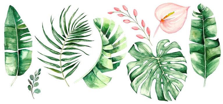 Watercolor tropical leaves and flowers illustration