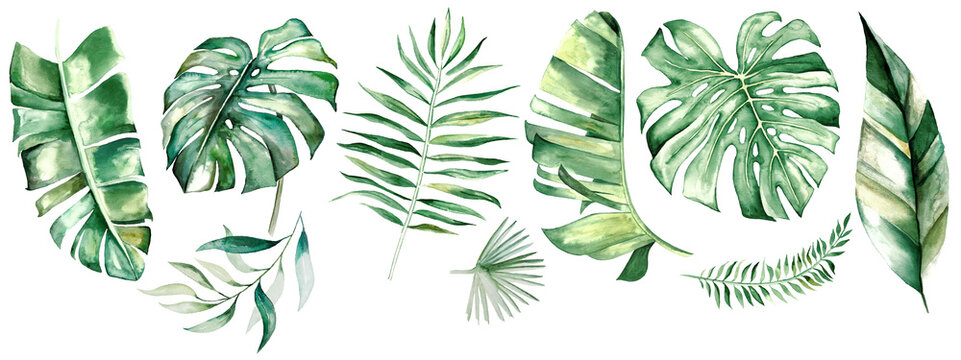 Watercolor tropical leaves illustration
