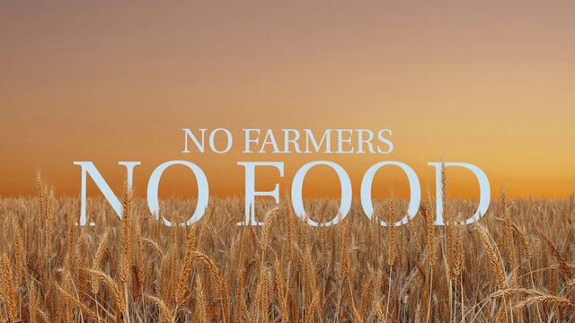 Wheat field during golden hour  sunset light. Farmer support. Farmer protest