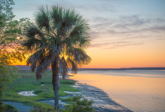 Palmetto tree at sunset by the river