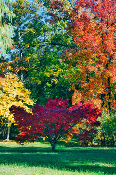 Multi colored autumn trees over grass at park in sunlight